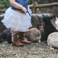 Feature image-Van Rooyen   Animal farm